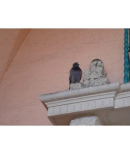 pigeon-on-ledge