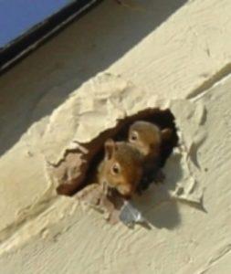 squirrels in Gainesville